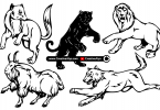 Animal-Illustrations