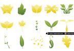 vector-leaves-for-logo-design