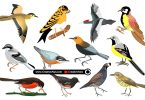 Beautiful-Realistic-Birds-in-Vector