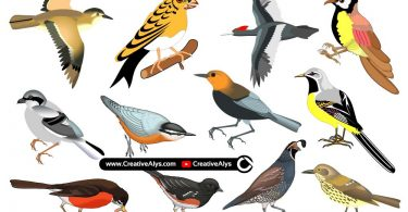 Beautiful-Realistic-Birds-in-Vector