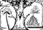 tree-graphics-borders-artworks