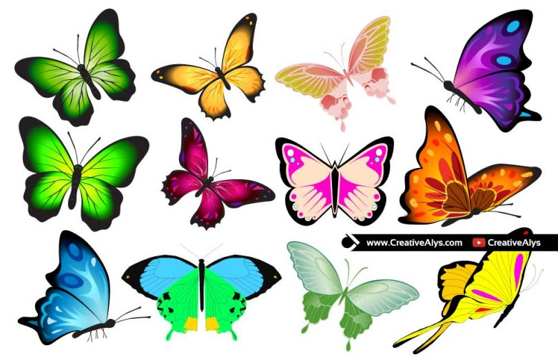 Vector-Butterfly-Collection